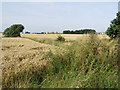 TA3423 : South of Wakefield Lane, near Hollym by Paul Harrop