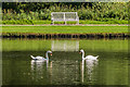 SE2868 : Swan symmetry by Ian Capper