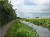 ST2525 : Bridgwater and Taunton Canal west of Hyde Farm by David Smith