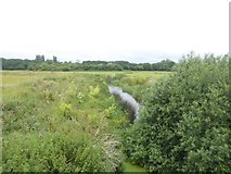 SX9791 : River Clyst between Sowton and Clyst St Mary by David Smith