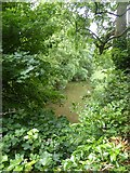 SX9792 : River Clyst by David Smith