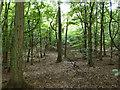 SU9096 : In Penn Wood by Robin Webster