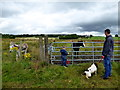 H4674 : Looking at a foal and donkeys, Mullaghmore by Kenneth  Allen