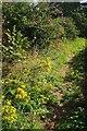 SX8965 : Path, Shiphay by Derek Harper
