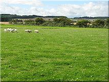 NU0937 : Sheep pasture near Smeafield by M J Richardson