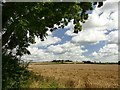 SK7487 : Field of barley below Wheatley Grange by Graham Hogg