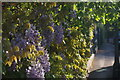 SP5107 : Wisteria, Park Town, Oxford by Christopher Hilton