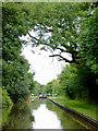 SJ6049 : Llangollen Canal north of Wrenbury Heath in Cheshire by Roger  Kidd