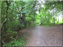 SU6022 : The Monarch's Way in Beaconhill Beeches by Jonathan Thacker