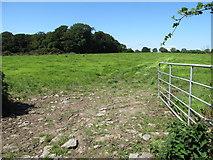 J6350 : Grassland in the Quintin Castle Demsene by Eric Jones