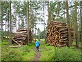 NY9458 : Huge log piles near the Devil's Water by Oliver Dixon