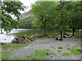 NY1716 : Tree stump and sheep by Buttermere by Hugh Venables