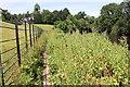 SJ4161 : Riverside walk near Eaton Lodge by Jeff Buck