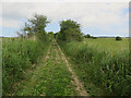 TG4013 : Track across Upton Marshes by Hugh Venables