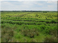 TG3914 : Upton Marshes by Hugh Venables