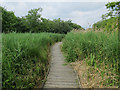 TG3515 : Boardwalk, Ranworth Broad by Hugh Venables