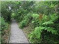TG3515 : Boardwalk to Ranworth Broad by Hugh Venables
