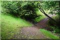 ST1241 : Path in Herridge Combe by Bill Boaden