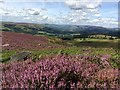 SK2380 : Heather, Hathersage and the Hope Valley by Graham Hogg