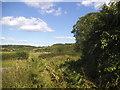 SU8597 : View from Speen Road, Hughenden Valley by David Howard