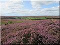 NZ6206 : Baysdale Moor by T  Eyre