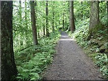 D2119 : Scnic trail [7] by Michael Dibb