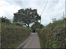 SS9707 : Oak tree by the road west of Force by David Smith