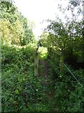 SS9607 : Footbridge near Underleigh Farm by David Smith