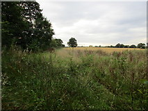 SK7259 : Overgrown field edge near Mather Wood by Jonathan Thacker
