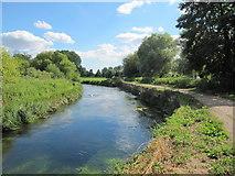 SU4828 : River Itchen by David Tyers