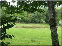 SS8810 : Marshland north of Windmill Farm by David Smith