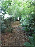 SS8911 : Ford Lane, a footpath to Little Heath by David Smith