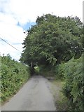 SS8911 : Tree by the entrance to Langmoor by David Smith