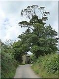 SS9011 : Tree outside Down Farm by David Smith