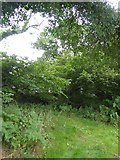 SS9010 : Overgrown quarry near Down Cottage by David Smith