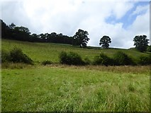 SS9110 : Field above the flood plain of River Dart by David Smith