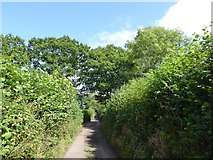 SS9010 : Trees marking field boundaries on Blackberry Down by David Smith