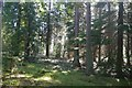 NU0538 : Kyloe Woods by Richard Webb