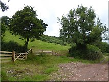 SS9208 : Gates into two hillside fields south of Ashilford by David Smith