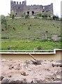 SO9490 : Meerkat Castle by Gordon Griffiths
