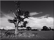SO8844 : An old oak tree in Croome Park by Philip Halling