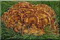 NY3307 : Bracket fungus : Week 34