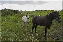 C6741 : Horses in a roadside field by Malcolm Neal