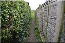 SY5697 : Toller Porcorum : Footpath by Lewis Clarke