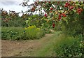 SK5702 : Former allotments on the Aylestone Meadows by Mat Fascione