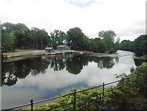 ST1380 : River Taff, above Radyr Weir by Roger Cornfoot
