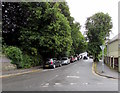 SS5146 : Leafy St Brannock's Park Road, llfracombe by Jaggery