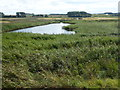 TF8145 : Reed bed and lagoon on Deepdale Marsh in Norfolk by Richard Humphrey