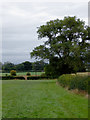 SJ6353 : Pasture north-west of Nantwich in Cheshire by Roger  Kidd
