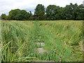 SD6972 : Causewayed footpath, Ingleton by Stephen Craven